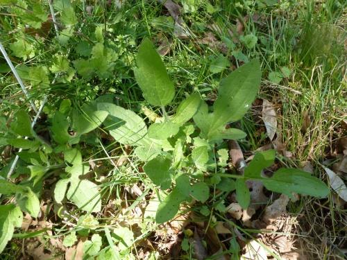 Mystery Plant Identified as Rudbeckia Trilobz