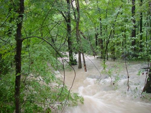 Reedy Creek after a rain
